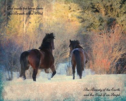 wild horses of alberta