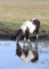 The Horse watcher