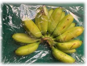BANANERA.PNG