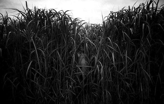 IN THE TALL GRASS (October 26th)