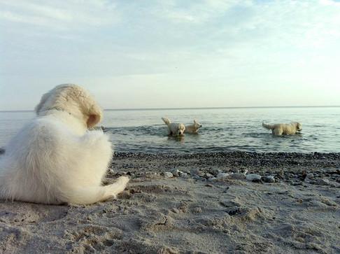 aalykke_Enzo_ stranden.jpg