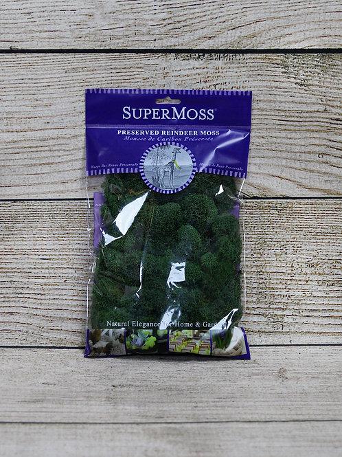 Super Moss - Preserved Reindeer Moss
