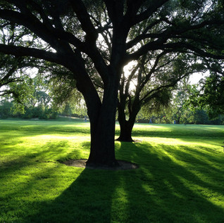 Reduce Your Energy Bill…Plant Trees!
