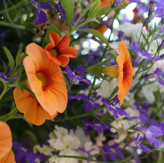 5 Steps to Grow Flourishing Annual Containers