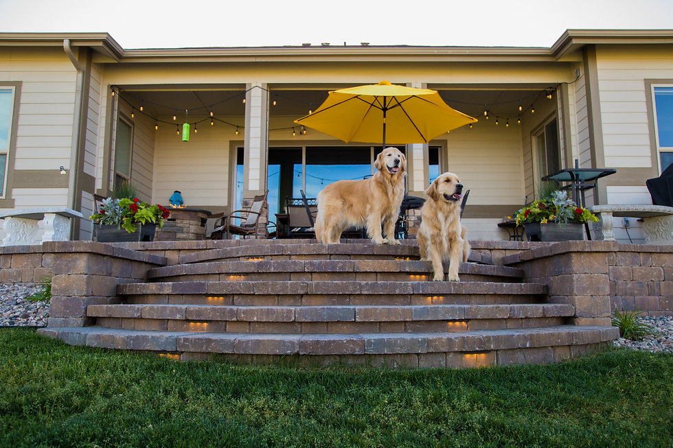 Dogs on Patio