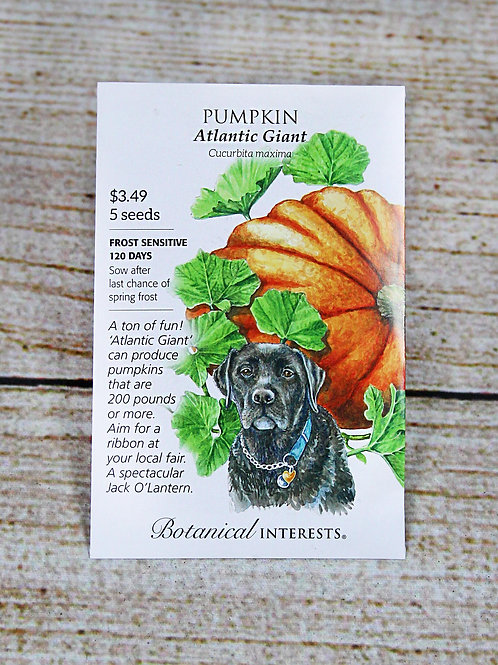 Pumpkin (Atlantic Giant)