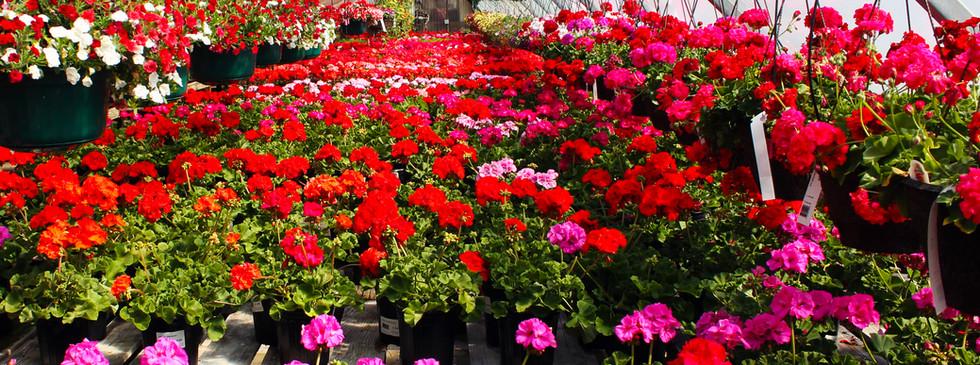 pinterst-flowers-4.jpg