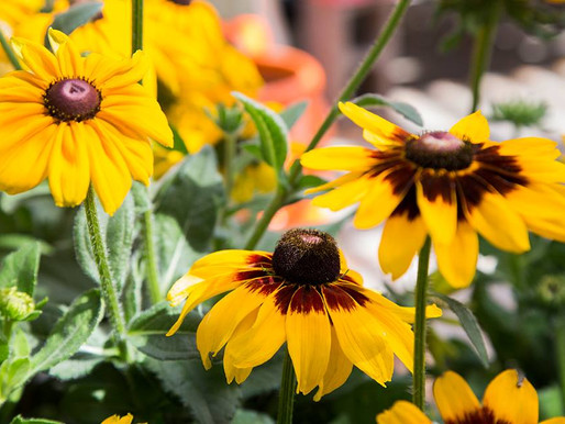 What You Should Plant this Fall