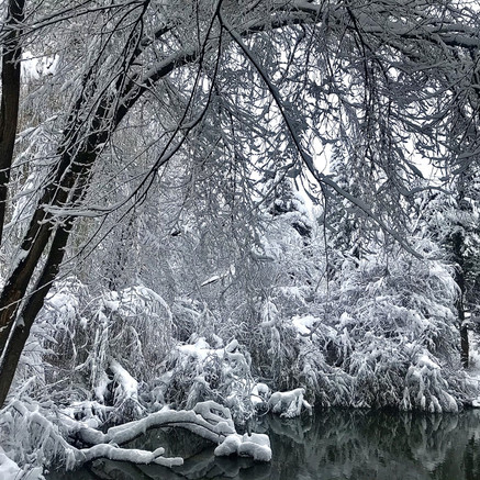 Proper Tree Care During Heavy Spring Snows