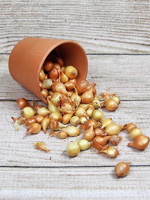 Yellow Onion Bulbs - Sold Per Scoop