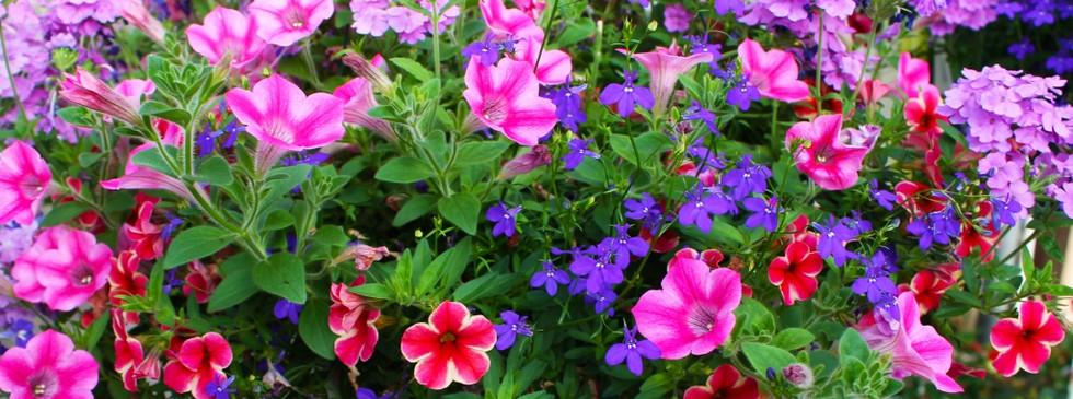 pinterest-flowers7-1024x642.jpg