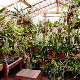 Why Fertilize Your Plants?