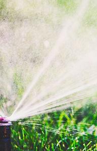 Sprinkler close-up