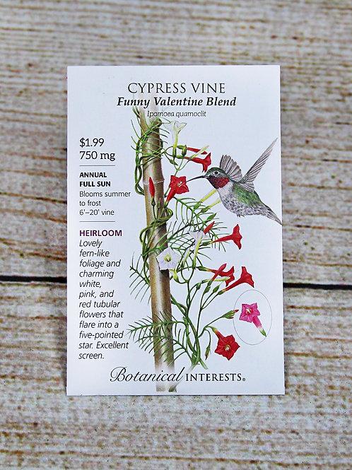 Cypruss Vine - Funny Valentine Blend Seeds