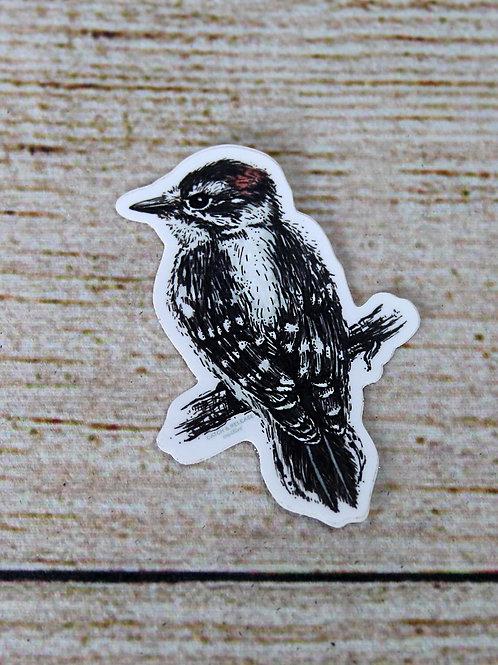 Downy Woodpecker Vinyl Sticker