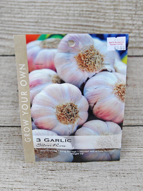 Garlic - Silver Rose