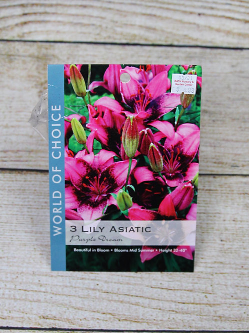 Lily Asiatic Bulbs - Purple Dream