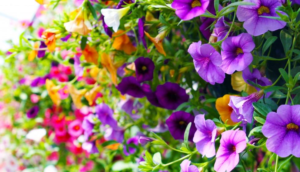 pinterest-flowers3-1024x716.jpg