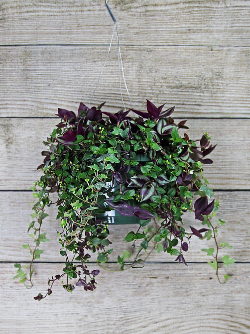 "8"" Foliage Basket"