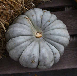 The Weird and Warty Fall Pumpkins and Gourds