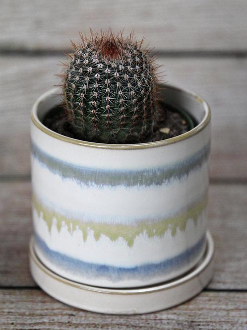 """Cactus 4"""""""