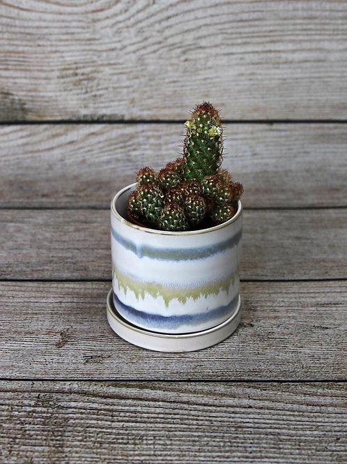 "3"" Lemon Ladyfinger Cactus - Mammillaria Elongata"