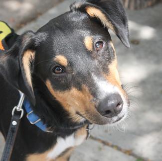 Drop Off Animal House Donations at Bath Garden Center
