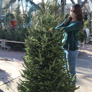 Real Christmas Trees are Good For the Environment
