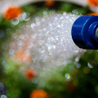 How to Water Your Plants This Summer