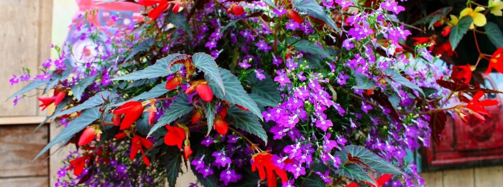 pinterest-flowers-5-1024x683.jpg