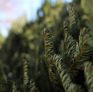Things You Should Know Before Buying a Christmas Tree