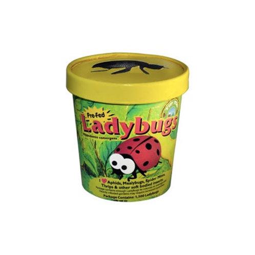 Pre-Fed Ladybugs
