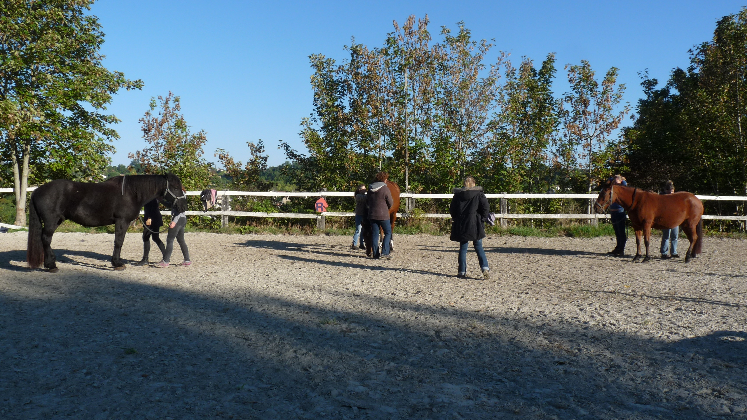 initiation ecole shiatsu equin Latresne