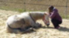ecole shiatsu équin sud ouest