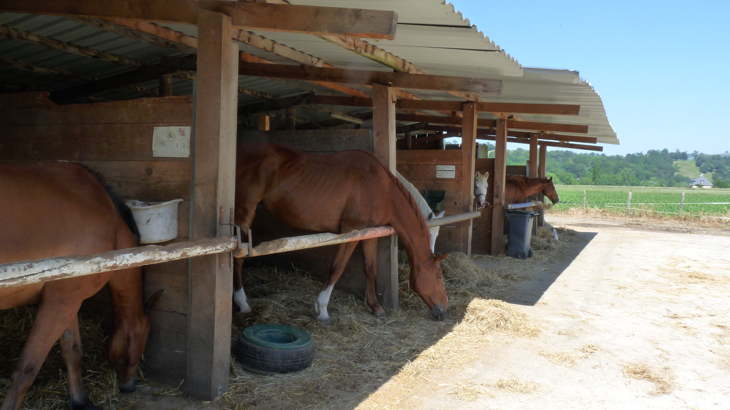 Idaux Mendy chevaux
