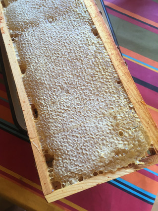 Lætitia récolte le miel du Jardin de la Cathédrale