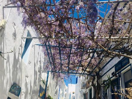 Les glycines sont en fleur à Amorgos