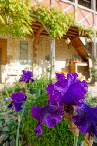 Des iris en novembre au Jardin de la Cathédrale !