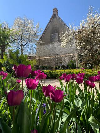 Les tulipes Triomphe Negrita colore le jardin