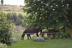chevaux_DSC_0005