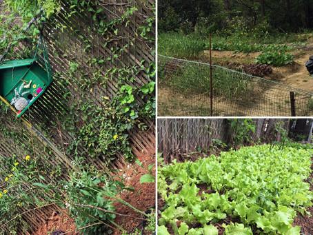 Magic Trail, Tapas, and Asian Gardeners