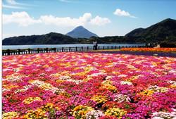 池田湖畔の花③