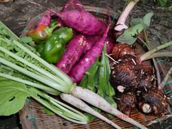 自家菜園の無農薬野菜