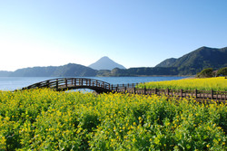 池田湖と菜の花⑤