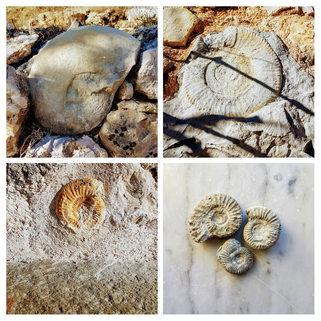 fossiles de la Réserve Géologique de Haute-Provence