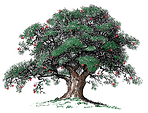 Tree - apples 4.png