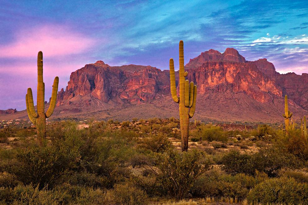 Saguaros at Sunset in Sonoran Desert near Phoenix..jpg