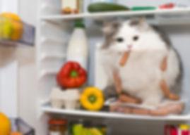 Кошка в холодильнике