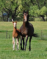 Foal photo Fieryrange.jpg