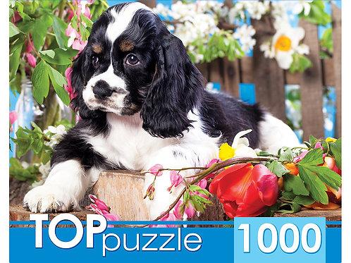 TOPpuzzle. ПАЗЛЫ 1000 элементов. ГИТП1000-2143 Щенок спаниеля в саду